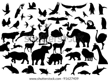 contour images of fauna on the
