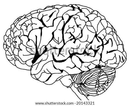 external image stock-vector-contour-line-drawing-of-a-brain-vector-20143321.jpg
