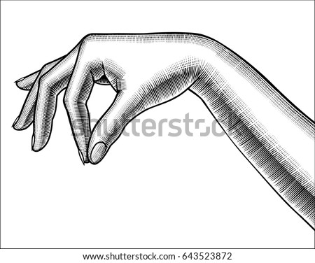 Contour of woman's hand palm down with pinch fingers. Retro design element. Vintage engraving stylized drawing. Vector illustration
