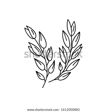 Contour sprigs of oats or wheat ears. Outline isolated icons. Hand drawn vector illustration for logo, print, poster. Black and white doodle image for clip art Stock photo ©