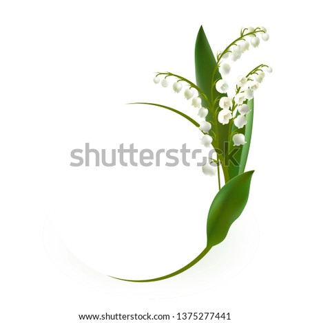 convallaria majalis   lilly of