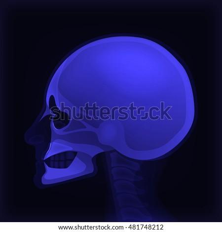 cool blue 3d skull vectorx ray