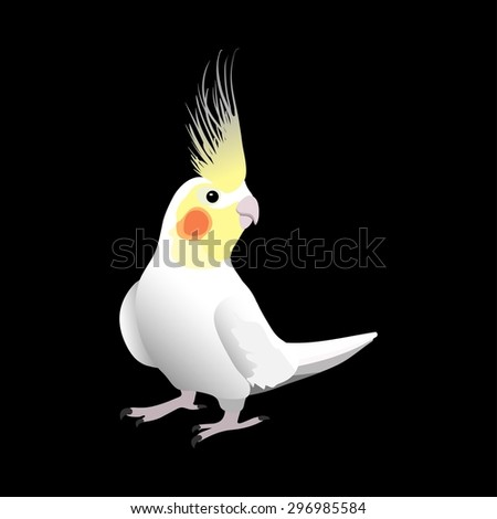 Corella parrot, exotic bird on black background - vector illustration