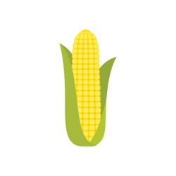 Corn cob in a green husk isolated on white background. Sweet golden corn. Ear of corn with leaves. Freshly picked plant. Single ripe maize. Cartoon corn symbol. Vector illustration,flat style,clip art