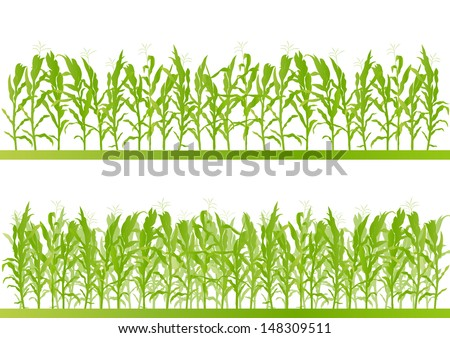 corn field detailed countryside