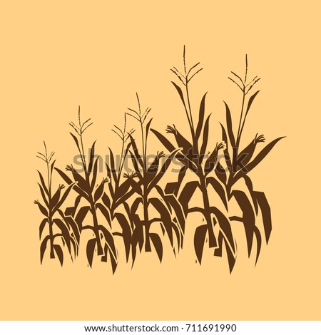 corn field illustrations with vector , vintage style silhouettes, both used to describe corn crops and corn farming fields and to describe corn harvest.