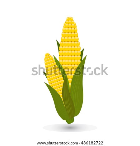 Corn on the cob vector illustration. Sweetcorn with leaves on background. #486182722