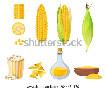 Corn products and food elements. Ear of corn in leaves, corn grits polenta, corn oil and popcorn.  Vector illustration
