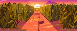Cornfield sunset landscape with wooden road pointers and high green plants. Choice of way concept with signposts pointing on path fork. Labyrinth, maze, choosing direction, Cartoon vector illustration