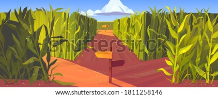 Cornfield with wooden road pointers and high green plant stems. Choice of way concept. Landscape with signposts pointing on paths fork. Labyrinth, maze, choosing direction, Cartoon vector illustration Сток-фото ©
