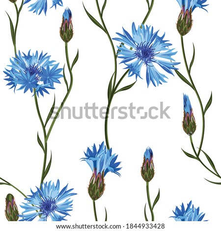 Cornflower floral seamless pattern on a white background.  Foto stock ©