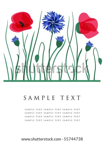 Cornflowers and poppies. Vector card.