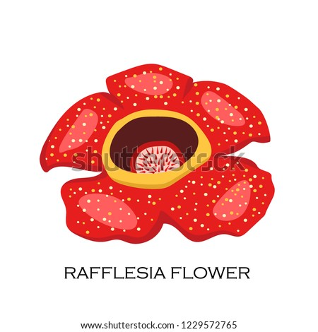 Corpse flower (Rafflesia arnoldii). The biggest flower in the wolrd. Malaysian symbol. Vector illustration