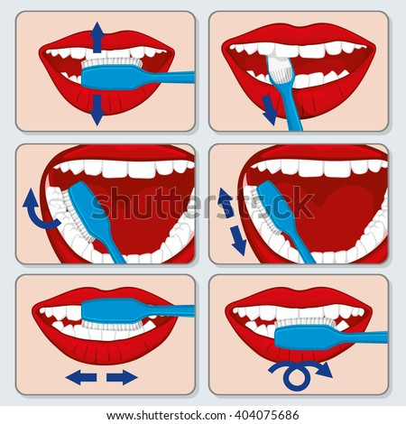 correct tooth brushing vector