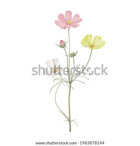 cosmos flowers in various color