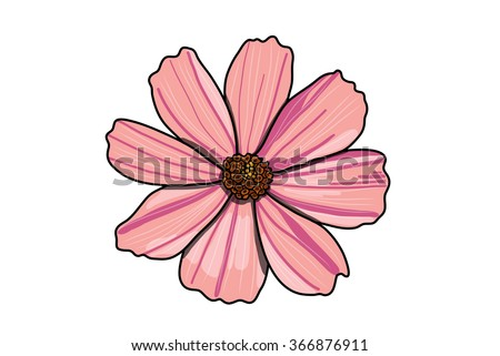 cosmos pink flower vector