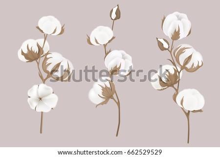 cotton flowers. Botanical illustrations. Greeting card.
