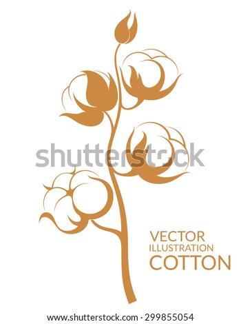 Cotton. Vector illustration