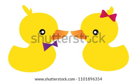 couple ducks  beautiful love