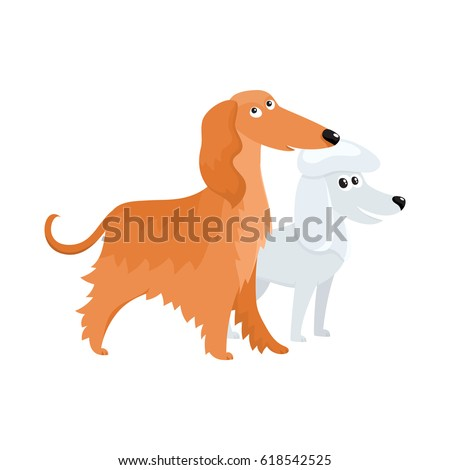 couple of cute  funny dog