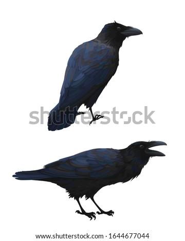couple of realistic ravens