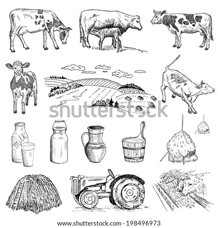 Milk Cow Vector Cow And Milk Hand Drawing Set