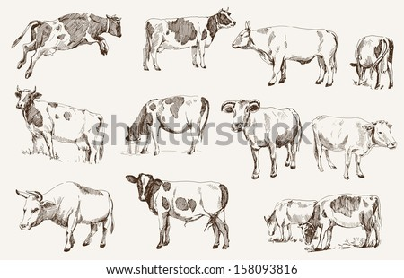 cow animal husbandry set of