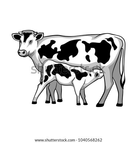 Cow feeds calf. Vector illustration.