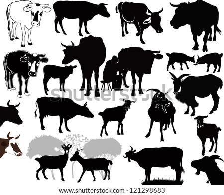 Indian Cow Calf Stock Photos Images Royalty Free Indian