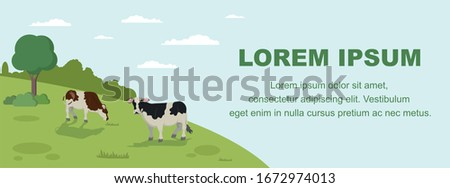 Cow Grazing on Meadow Banner. Animal Farm Cattle Livestock Eating Grass on Field Vector llustration. Healthy Organic Dairy Milk Products. Countryside Grassland, Rural Pastoral Landscape Foto d'archivio ©