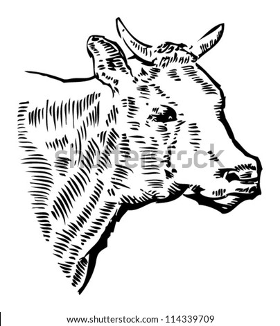 Simple Cow Head Drawing Cow Head Drawing