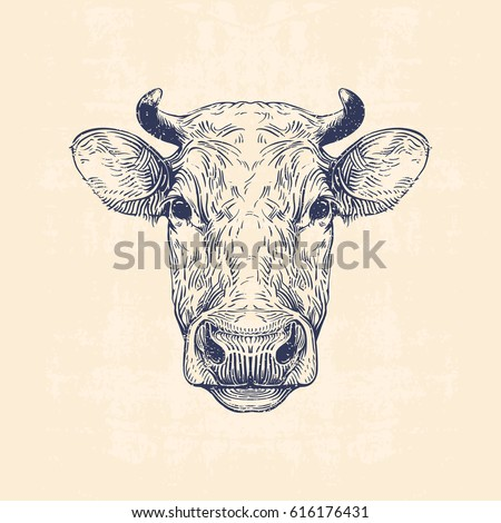 cow head  hand drawn vintage...