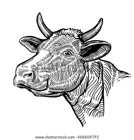 cow head  in a graphic style....