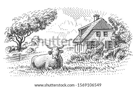 Cow near countryside house engraving style illustration. Countryside vintage drawing. Vector. Sky in separate layer.