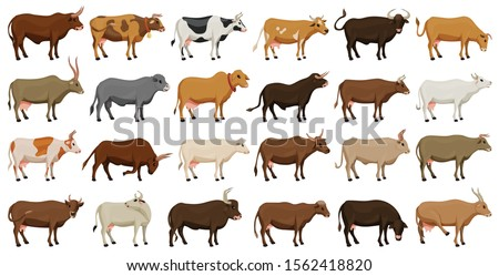 Cow of animal vector cartoon set icon.Isolated cartoon icon farm animal of cow.Vector illustration cattle for farm on white background.