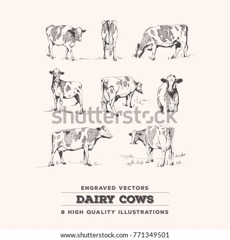 Cow Set - 8 realistic cow line art vintage engravings. Suitable for labeling, stationery design, educational illustration.