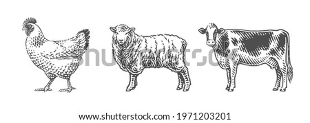 Cow, sheep and chicken, farm domestic animals. Hand drawn engraving style vector illustration.Hand drawn engraving style vector illustration.
