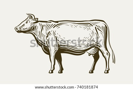Cow standing, view profile. Farm animal, beef, milk. Sketch vector illustration