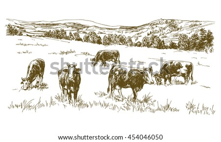 cows grazing on meadow. hand...