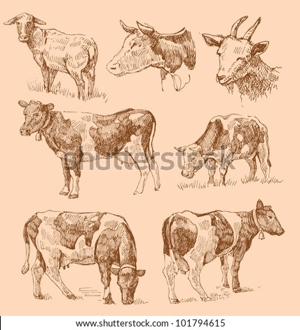 cows hand draw sketch