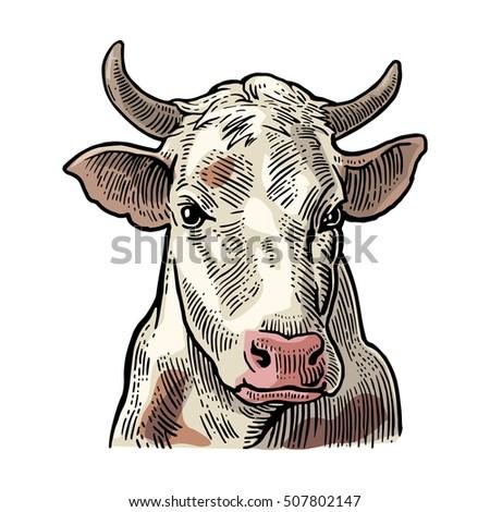 cows head. hand drawn in a...
