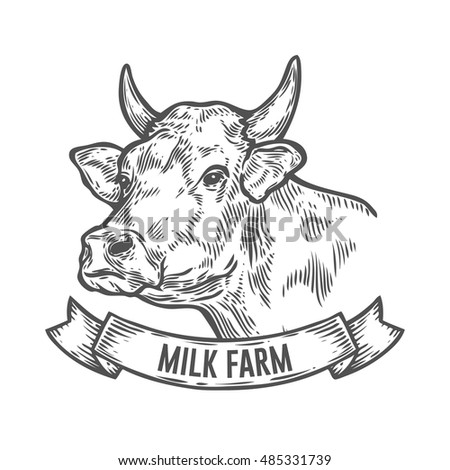 Cows head. Hand drawn sketch in a graphic style. Vintage vector engraving illustration with ribbon for poster, web. Isolated on white background