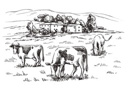 cows in the meadow on the background of houses