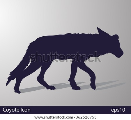 coyote  canis latrans  vector