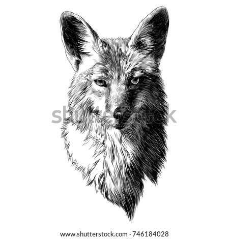 coyote sketch head vector