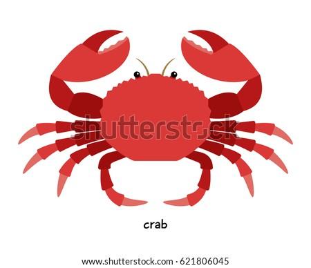 crab   aquatic animal