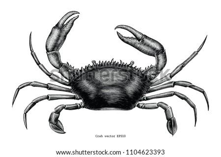 crab hand drawing vintage clip