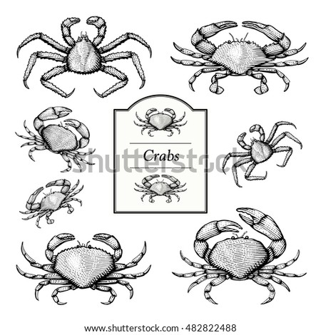 crab vector illustrations in