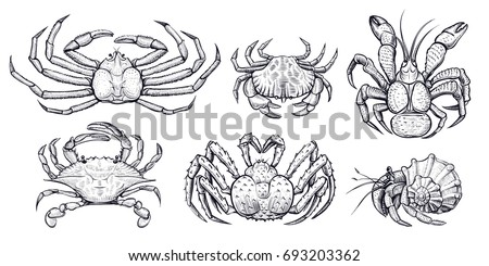 crab vector set hand drawn
