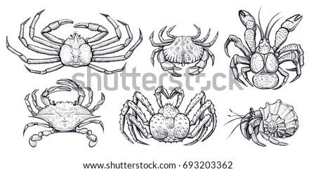 crab vector set hand drawn